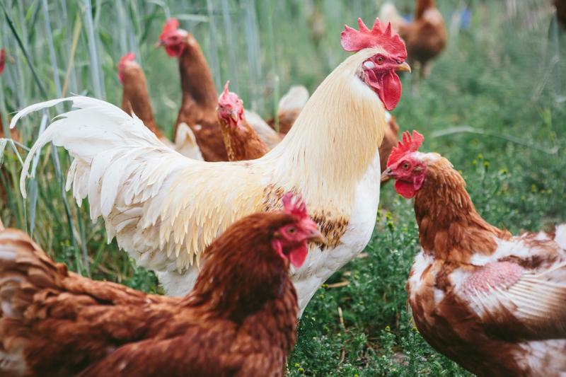 Bio-Fleisch aus kleinbäuerlicher Weidehaltung